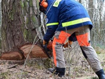 Auf die Technik kommt es an: Das richtige Fällen von Bäumen will gelernt sein