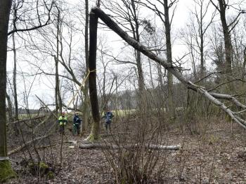 Sturmholz: Wegen der Spannungen im Holz müssen beim Fällen umgeknickter Bäume besondere Sicherungsmaßnahmen getroffen werden