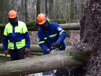 Wurzelteller: Ausbilder Josef Hofmann (links) erklärt André Hofmann die richtigen Schnitte zum sicheren Abtrennen des Baumes