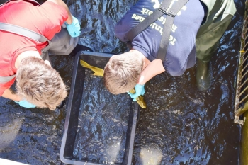 Fischrettung: Bad Staffelsteiner THWler unterstützten den Angelverein Ebensfeld beim Umsetzen vom niedrigen Sauerstoffegehalt im See bedrohter Fische